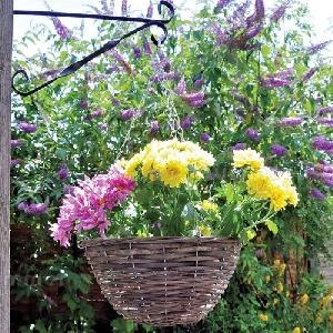 SUMMER HOUSES - Hanging baskets and planters